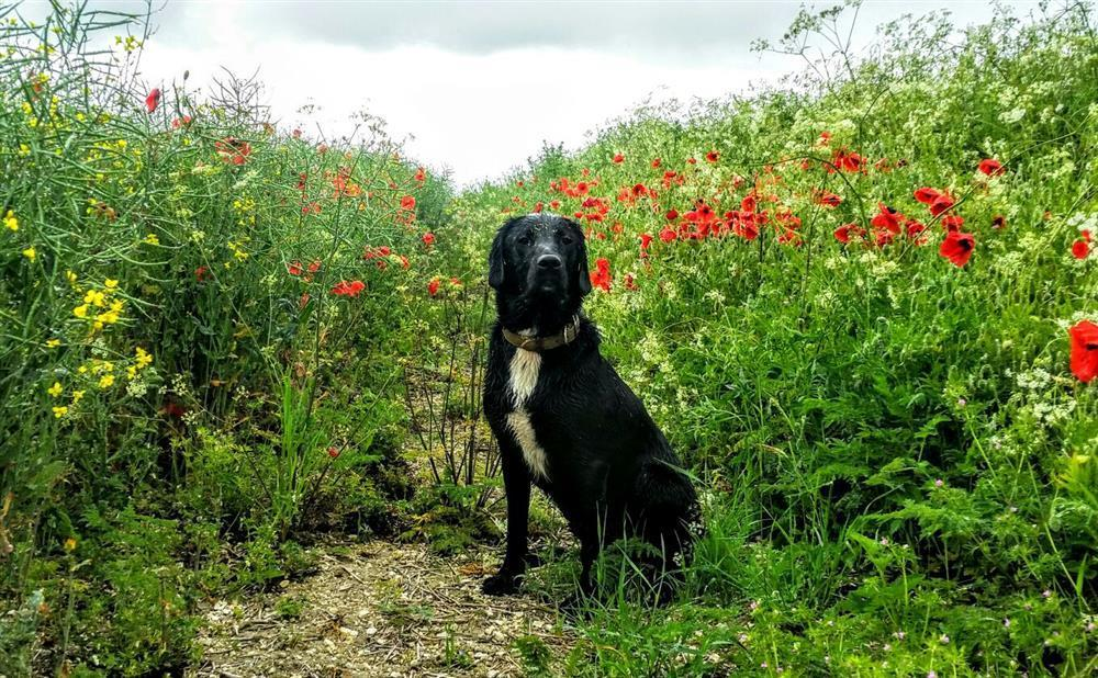 Photograph of 146-8-bring your well behaved dog4