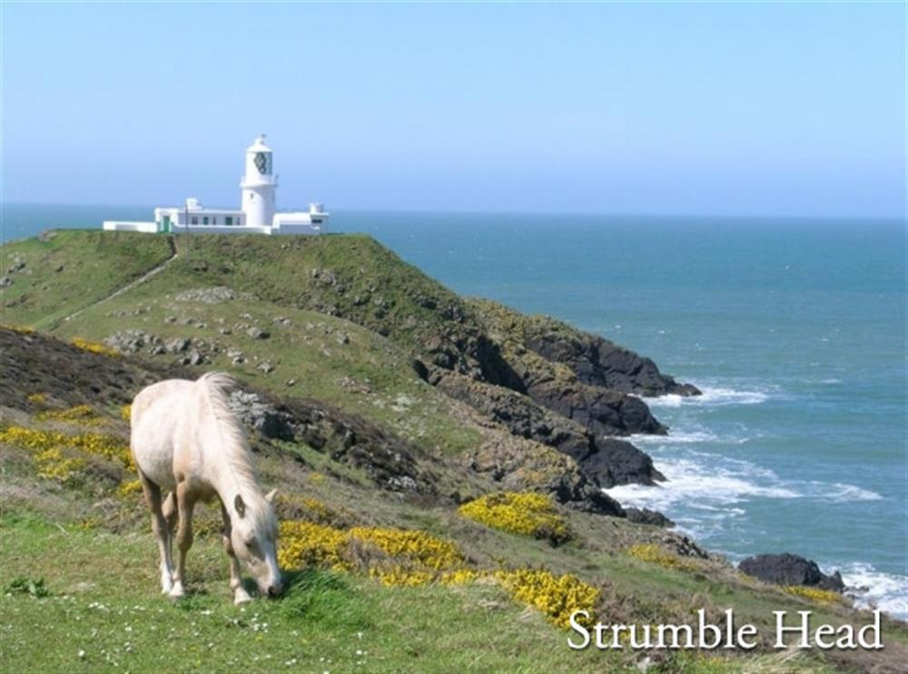 Photograph of 09 Strumble Head Lighthouse and Ponies 538