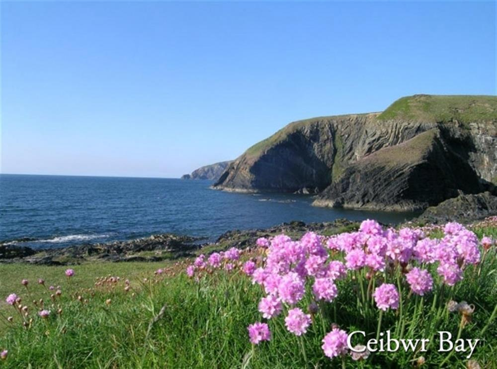 09 Pembrokeshire Coast Path 2134