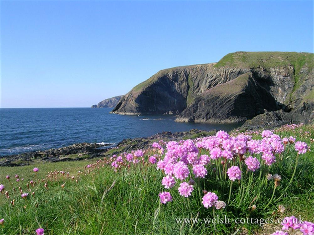 551-9-coastal-path-at-ceibwr