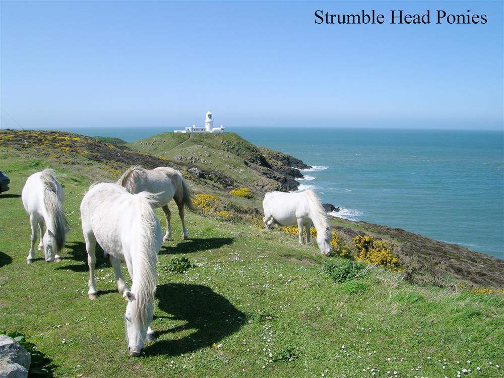 Photograph of 07-Local Area-Strumble Head-710 (2)