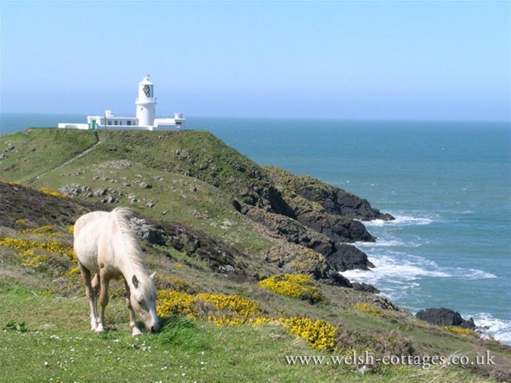 539-09-Local Area-Strumble Head Lighthouse (6)